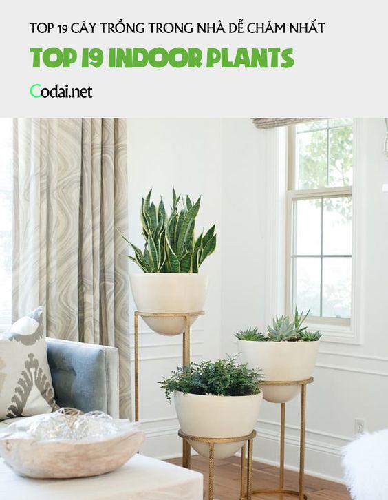 19 loại cây Indoors dễ chăm nhất