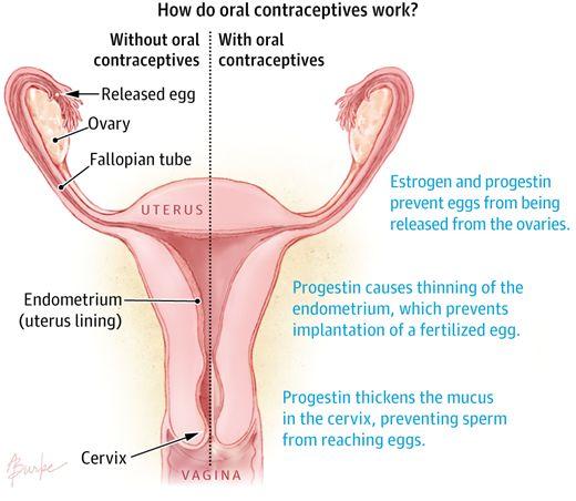 Oral Contraceptives Information 20