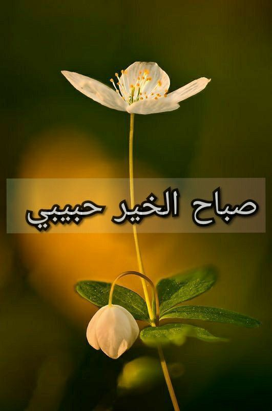 صباح الخير حبيبي Good Morning Arabic Love Words Arabic Love Quotes