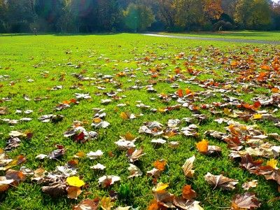 Lawn Care Tips For The Fall -  When the weather starts to get chilly, it is time to look for lawn care tips for the fall. Taking care of your lawn in the fall is essential to your lawns year round health. Read this article for more information.