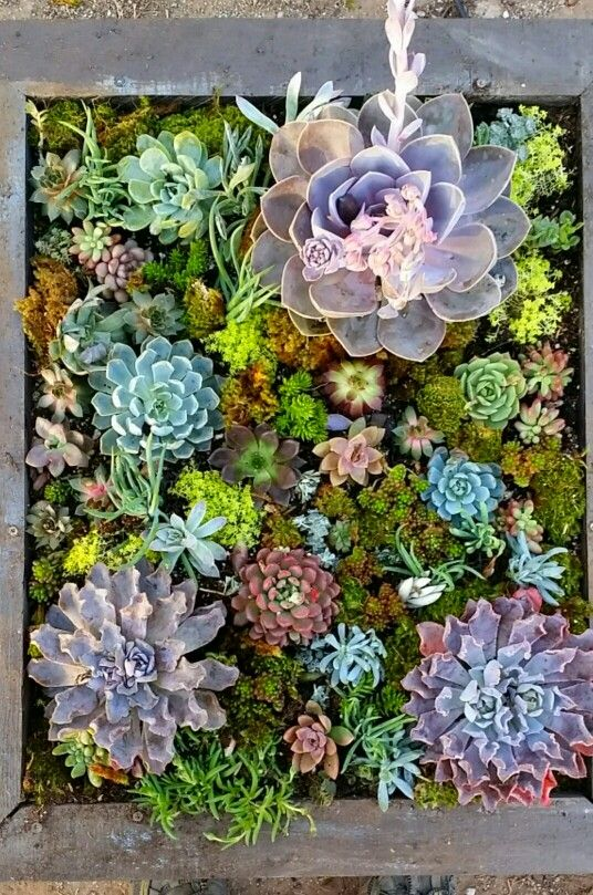 3.5ft x 2.5ft soft succulent wall. In my top 5 favs I've done