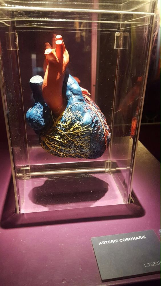 "la gina on Twitter: ""22. I visited the real bodies museum in Milan with one of my classmates 💉  {12th November 2016} https://t.co/o9xmAyLuSp"""