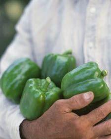 peppers garden: