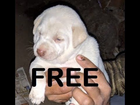 Free Mix Puppies For Adoption Puppy Adoption