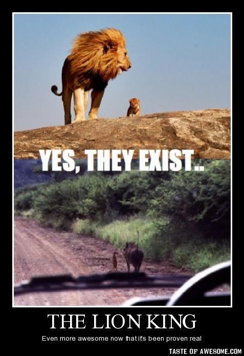 The Lion King Meme Thread Archive Lea Halalela Lion King Forum