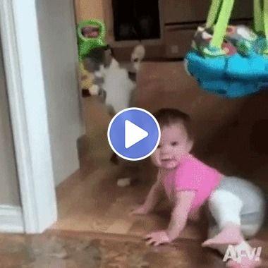 O gato tomou um grande susto com o bebê