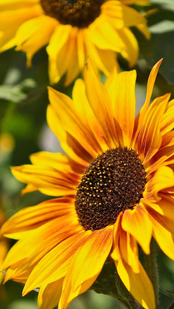 Flower photography, Photography and Nature on Pinterest