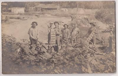 1910s Farming / Agricultural Scene Real Photo RPPC Postcard Workers Farm Field