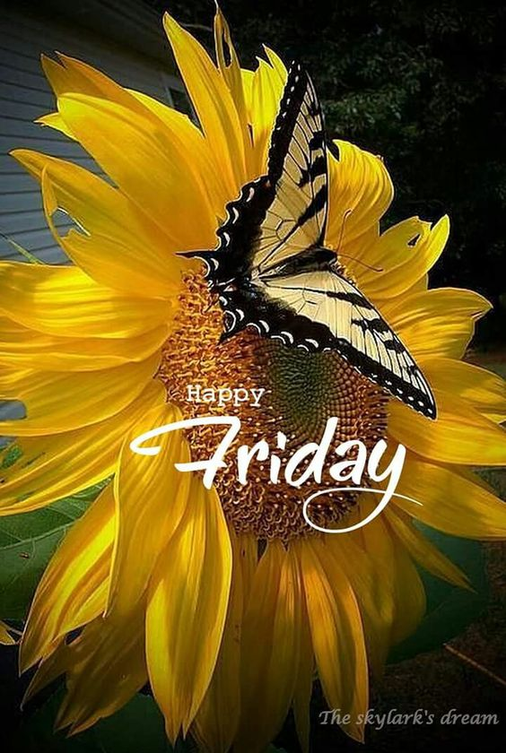 FridayZ