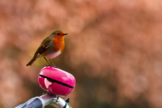 Roodborstje / Robin by Andy Sels on 500px