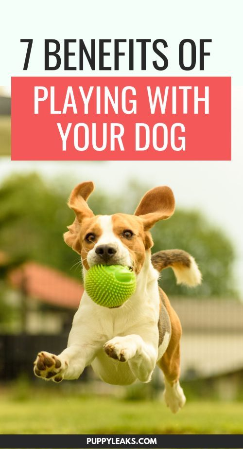 7 Benefits Of Playing With Your Dog Puppy Owner Advice Dog