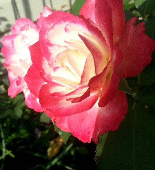 My Own Secret Garden♡