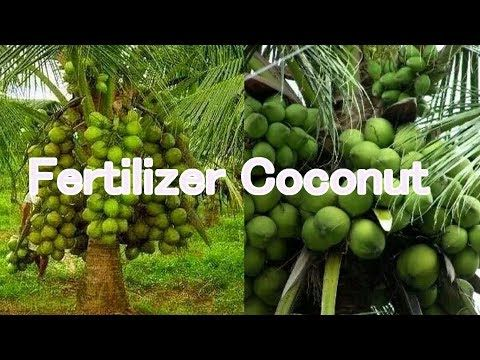 Home Youtube Fertilizer For Plants Growing Fruit Trees Fertilizer