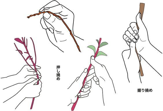 Alapjai virágkötészet (ikebana 専 慶 áramlás)
