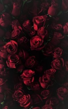 Love Nice Red Flower Black Rose Wallpaper Iphone 6 New Tumblr