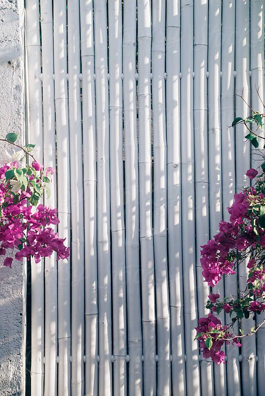 Simple Stylish Bamboo Wooden Fence Painted In White With The Fence Paint Bamboo Garden Fences Wooden Fence