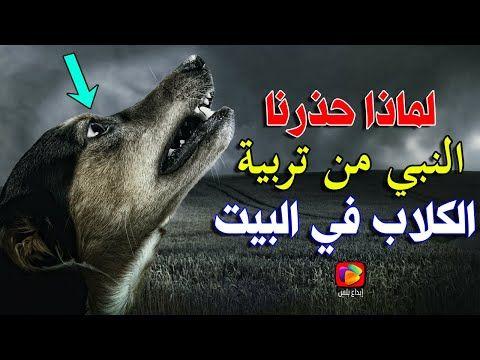 لماذا حذرنا النبيﷺ من لمس وتربية الكلاب في البيت السبب اكتشفه العلم بعد 1400 عام سبحان الله Youtube Movie Posters Poster Movies