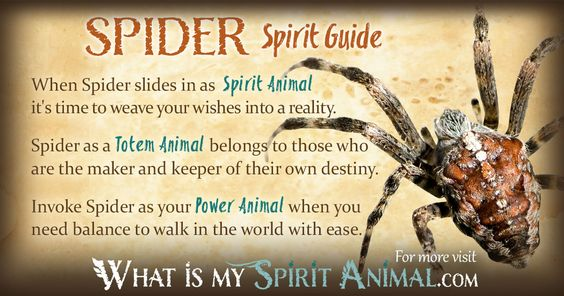 In-depth Spider Symbolism & Spider Meanings! Spider as a Spirit, Totem, & Power Animal. Plus, Spider in Celtic & Native American Symbols & Spider Dreams!