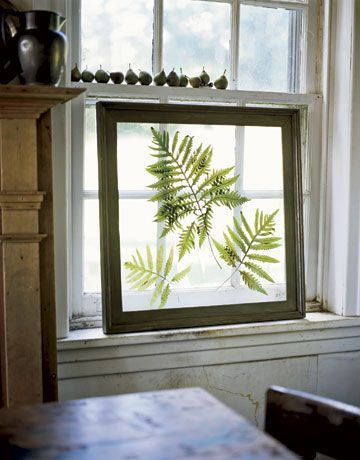 fern in picture frame near windowsill: