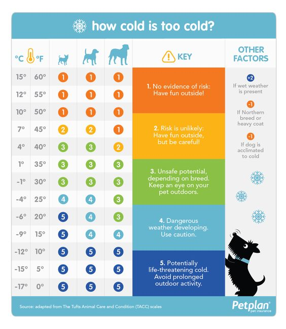 How Cold Is Too Cold For Your Dog Petplan Cold Weather Dogs