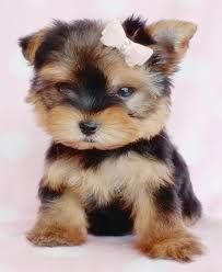 Image result for puppies for free