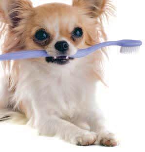 Integrative Dental Care