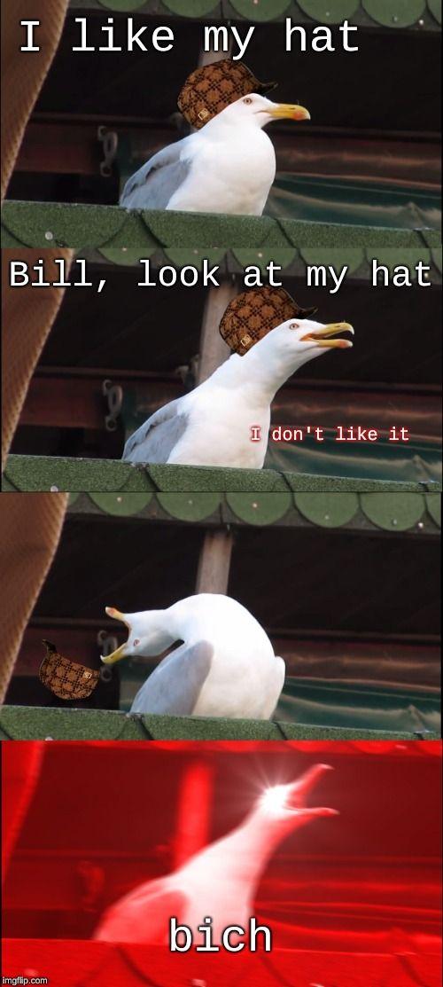 Respect The Hat Stupid Memes Stupid Funny Memes Funny Animal Memes