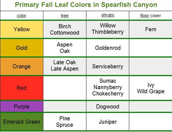 """While you can see fall colors throughout the Black Hills, the premier place to do some """"leaf peeping"""" is Spearfish Canyon."""