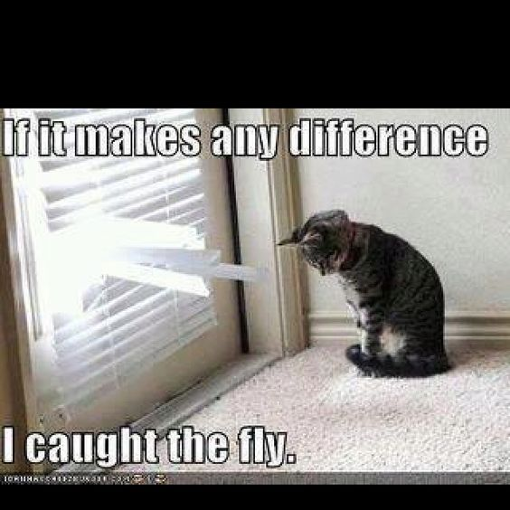 Flys!