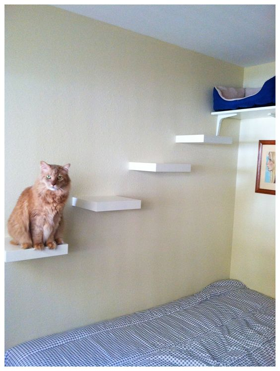 Cat Shelves - About a $50 project including the bed at the top. 4 - $6 Ikea Lack shelves, 1 - $5 shelf at the top from Ikea I don't remember the name, 3 - $.50 shelf supports for top shelf, $20 dog bed from Petco, $2 industrial Velcro from craft store.