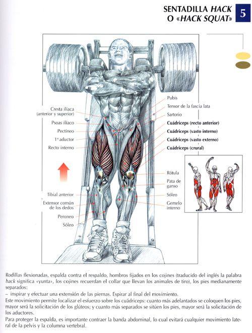 sentallida-ejercicios-gym-rutina
