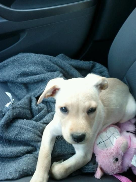 The day I rescued my girl angel!!