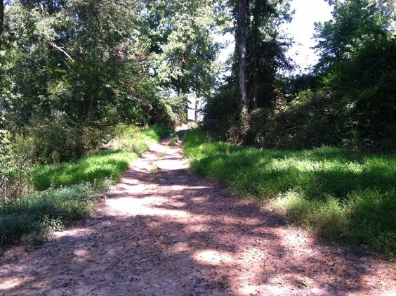 Thomasina's Words: You Never Know Where The Path Will Lead You