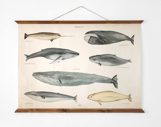 Vintage whale poster.