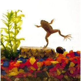 dorm pet idea - frog!