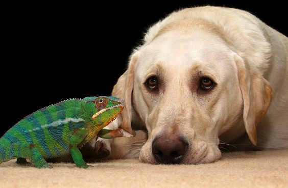 Chameleon and Lab