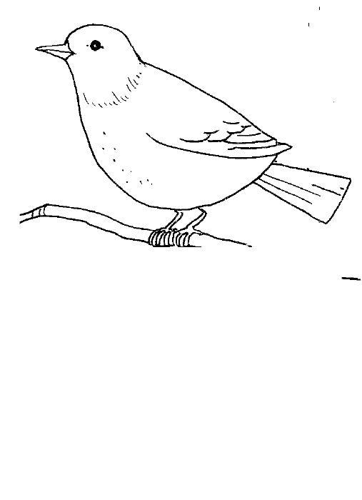 Bird Body Parts : Pinterest the world s catalog of ideas