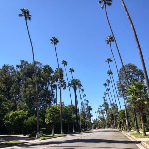 December And January Weather In Los Angeles Provides Amazing Photo Opportunities Throughout The City Glitteratitoursla Los Angeles California Tours Photo