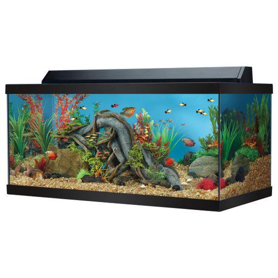 Fish aquariums top fin 40 gallon for Petsmart fish aquariums