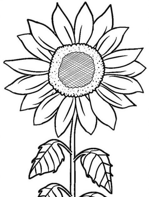 Wow 27+ Sketsa Bunga Bagus di 2020 | Bunga matahari
