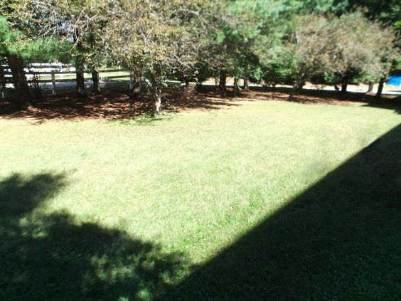 Our large lawn.