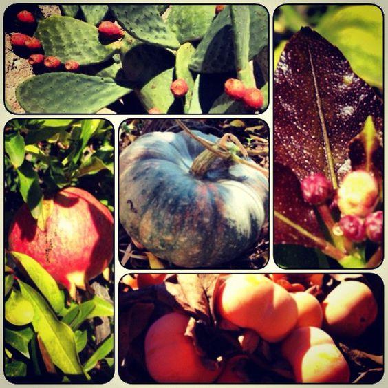 #autumn #fruits #pricklypear #prickly #pear #higos #chumbos #higoschumbos #fruta #otoño #calabaza #granada #hoja #limón #Pomegranate #Pumpkin #lemon #caqui #kaki