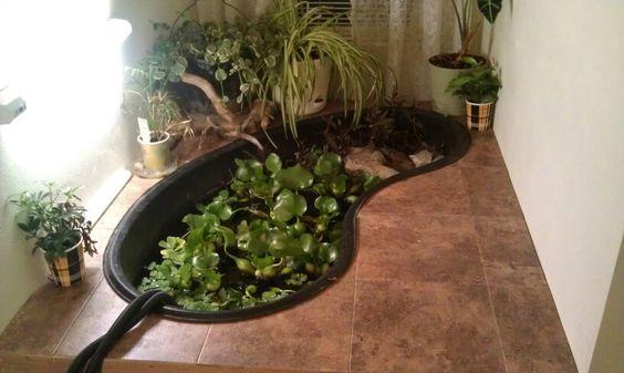 Indoor pond turtle pond and pond design on pinterest for Indoor koi pond designs