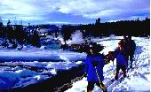 For your next family adventure check out a Snowshoeing Winter Wildlife Safarai in Yellowstone National Park