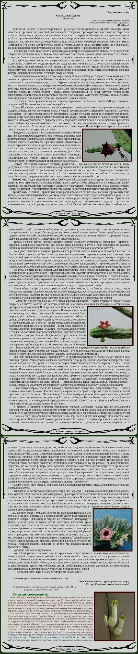 Кактусы и суккуленты 4b1564aafd9c3a9343ad19c3e36f461e