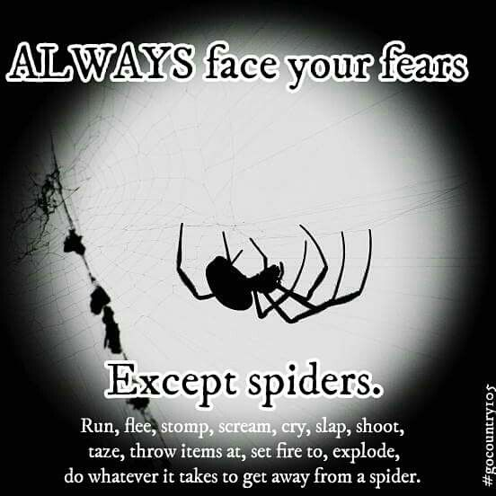 This is more for my wife, spiders are the babe of her existence.