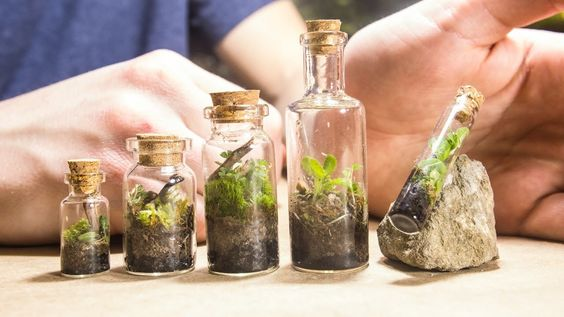 I've been getting a fair amount of requests to make some tiny terrariums.  ...  here's 5 of them. Enjoy! If you want more specifics on how I made these terrariums, check out How To Terrarium episode 3. It gives more specifics on making your own native. Making,