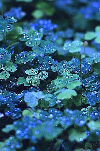 Composition. Positioning. This grouping of clovers combined with the aperture make it seem as if the water drops were intentionally put there to take the picture, although it is unlikely that they were:
