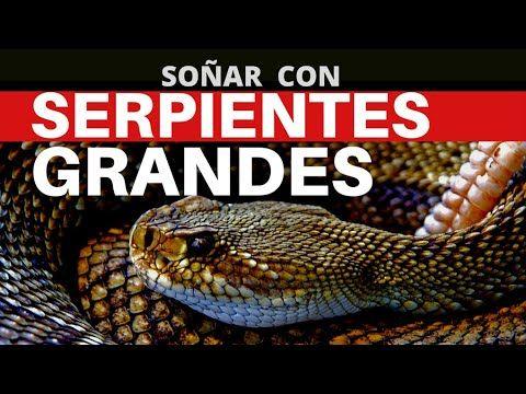 Que Significa Soñar Con Serpientes Grandes Serpientes Culebras Culebra