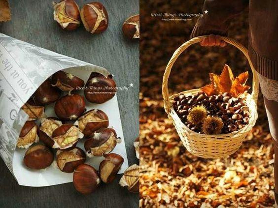 Beautiful chestnut